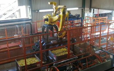 Robotic Fruit Crate Handling